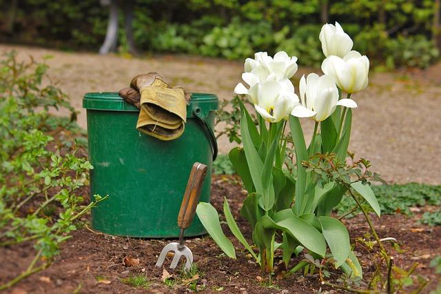 Tężec – śmiertelne zagrożenie, które czyha… w ogrodzie