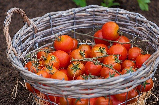 Pomidory polecają się na upały!